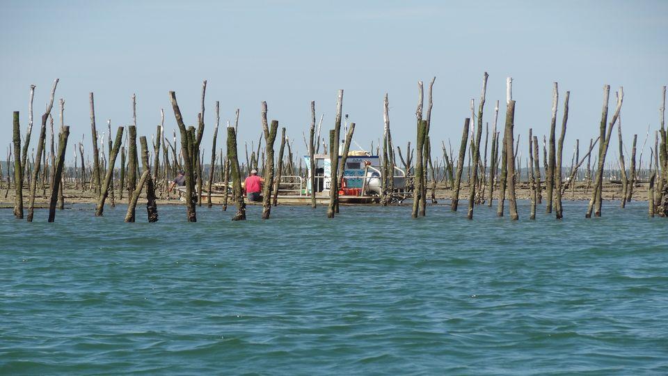 Villa Ocean Arcachon Bay